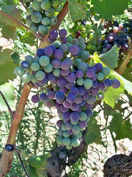 Verasion grapes